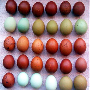 natural-colored-eggs